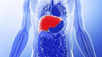 Think of your liver like your own personal filtering system.