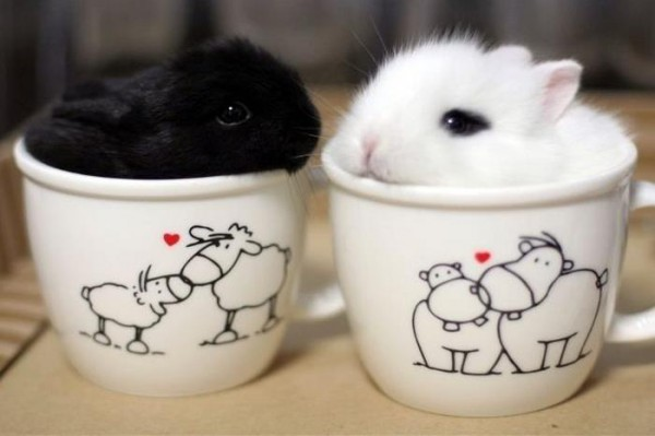 07_animal-In-Cup