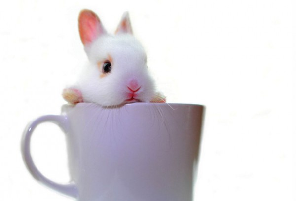 10_animal-In-Cup