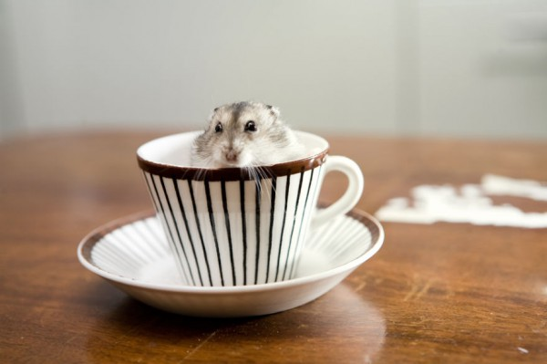 15_animal-In-Cup