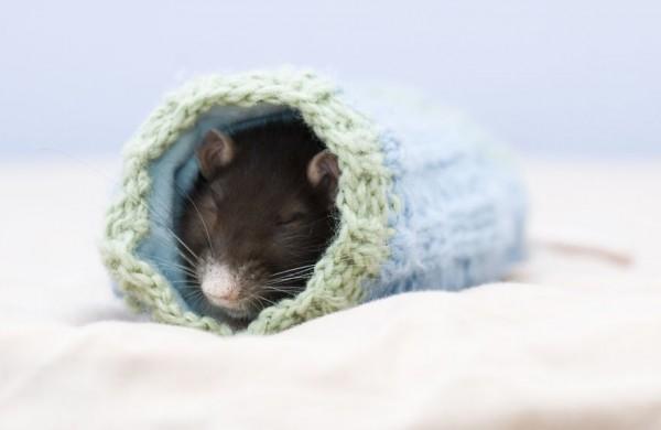 cuttie-rats6