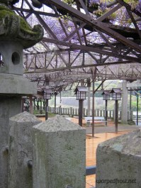 The wisteria in Kurogi, right before it hit its peek (April 2011)