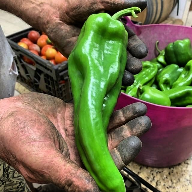It takes  hard work to grow good food!Thanks Farmer Dave @st.fiacresfarm #thankafarmer Get these bullhorn peppers  tomorrow - perfect for stuffing!