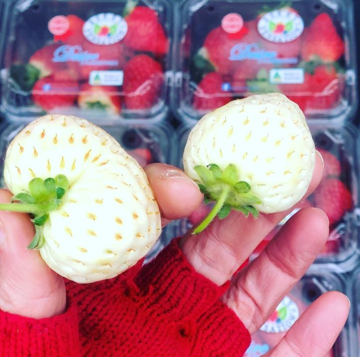 Apparently if you live in Japan you'd pay $50 for one of these white strawberries 🍓… so rare! There's a few of them left, come on down