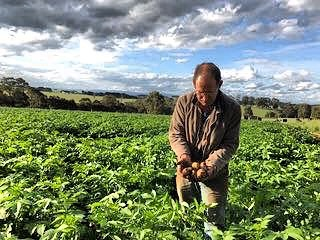 Gordon out inspecting the first of the new spud crop. Not long until we have new season Jones Potatoes 🥔 back at our market