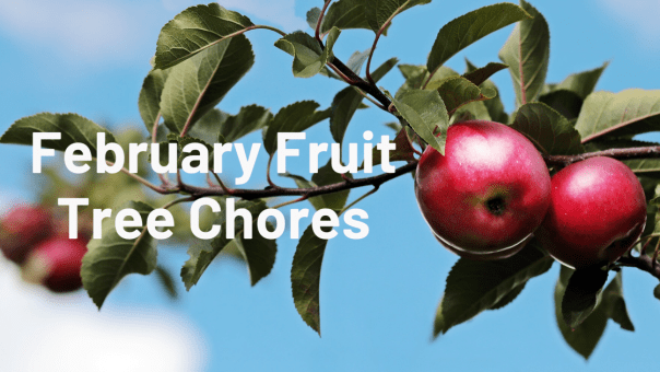 Blog banner for February Fruit Chores