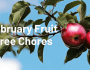 February Fruit Tree Chores