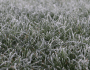 Winter Lawn Care Practices