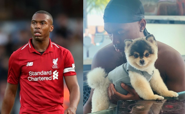 Update: Footballer, Daniel Sturridge is being sued for failing to pay £26,000 reward to man who found his lost Pomeranian dog in Los Angeles in 2019