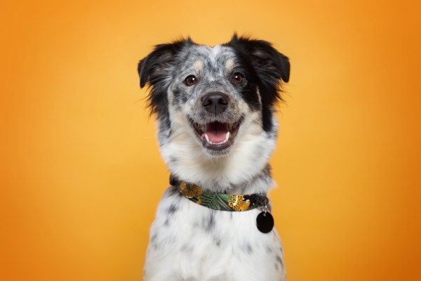 Uśmiechnięty kundelek w obroży dla psa od Warsaw Dog