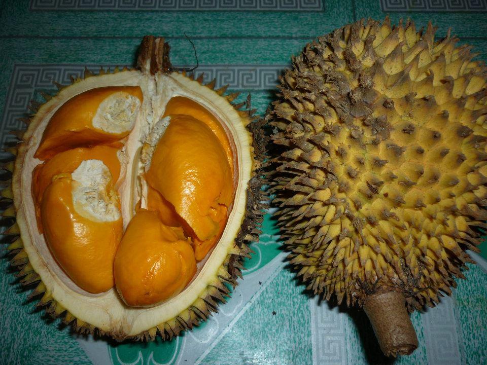 buah papakin