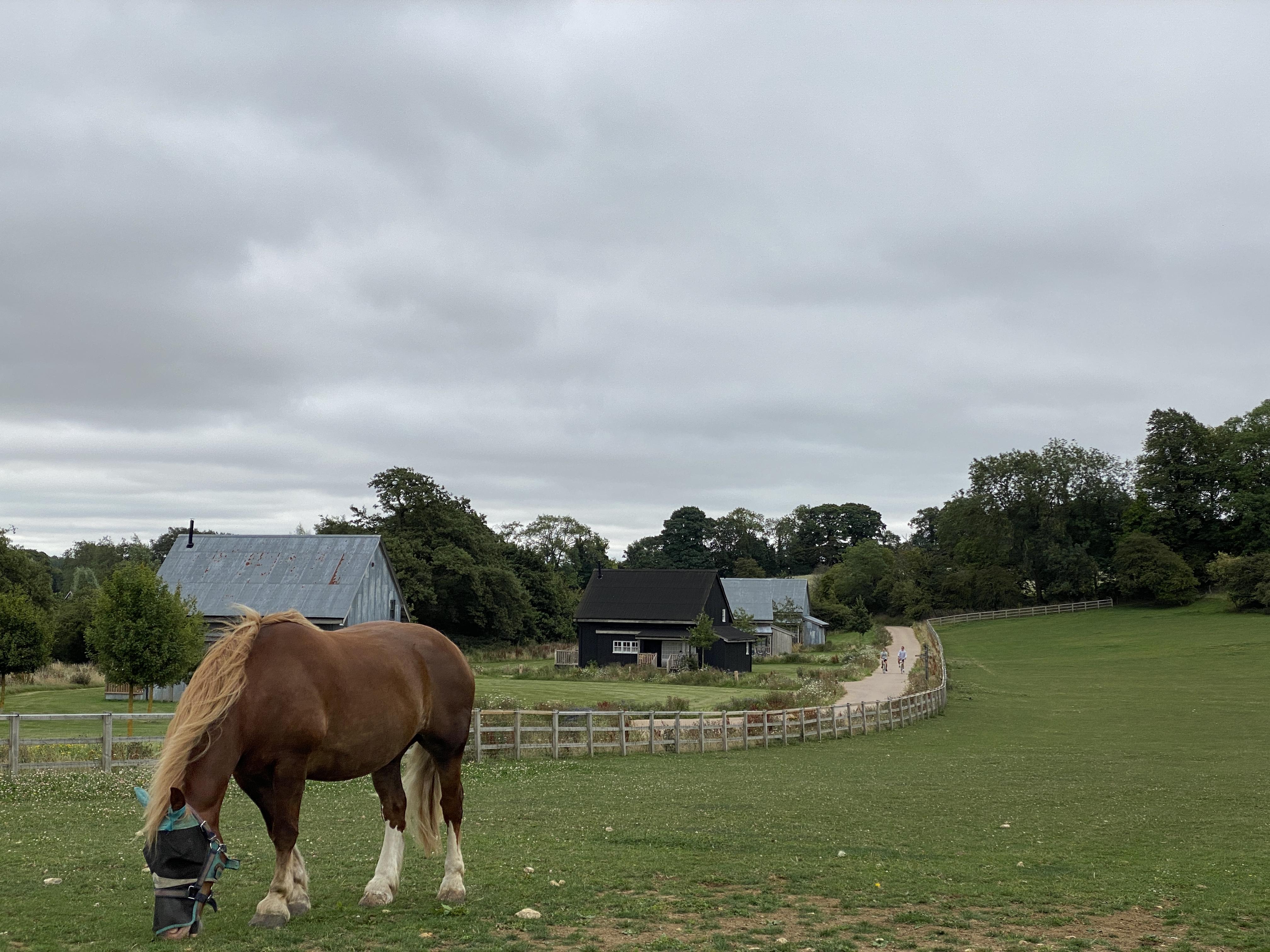Horse grazing near accommodation