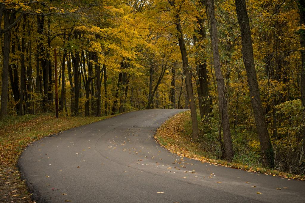 winding road surrounded by Autumn trees