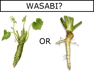 Comparison picture of Genuine Wasabi and Fake Wasabi (Horseradish).