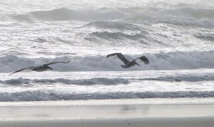 A pair of pelicans flying low above the waves