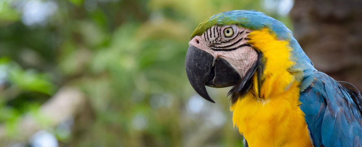 Blue and Gold Macaw Hero