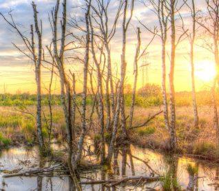 cropped-trees-swamp-lake-summer-442393-1.jpeg