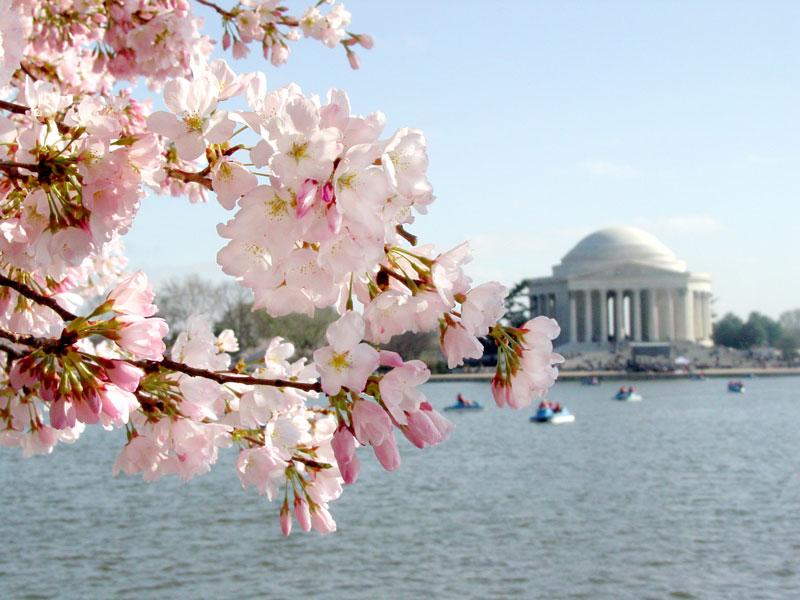 Image result for Washington D.C, USA spring blossoms