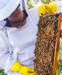 Mindy in bee suit with bees and honey comb.
