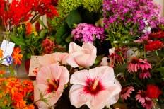 Saturday Fair flower exhibits