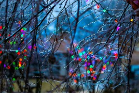 Christmas lights shine through tees covered in ice.