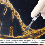 "The technology allows scientists to edit genes by using biological ""scissors"" that operate a bit like a word-processing program that can find and replace defects.Samantha Lee/Business Insider"