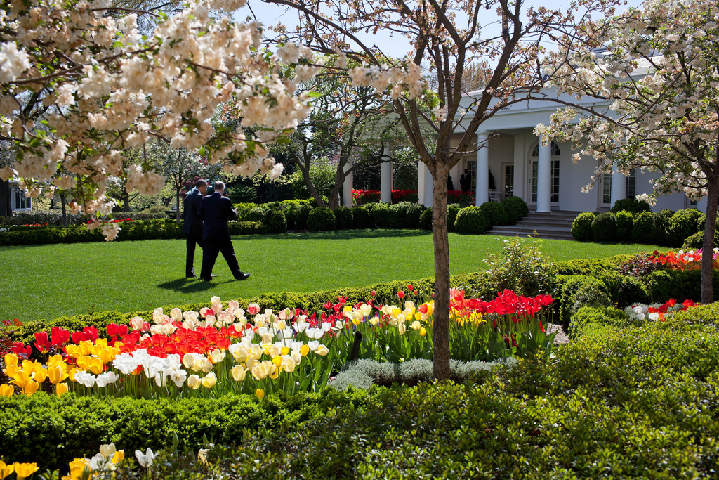Rose garden pictures white house