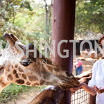 Karen Blixen Giraffe orphanage (Photo Anchyi Wei)