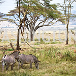 Lewa Wildlife Conservancy (Photo Anchyi Wei)