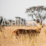 Nairobi National Park (Photo Anchyi Wei)