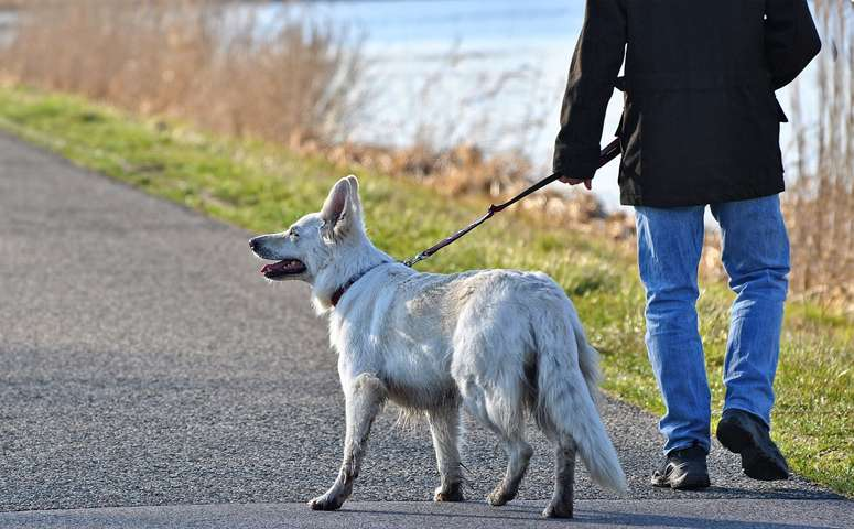 Owners Frequently Pass On COVID To Pets