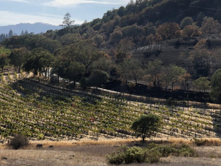 Napa Licks Its Wounds and Holds Its Breath