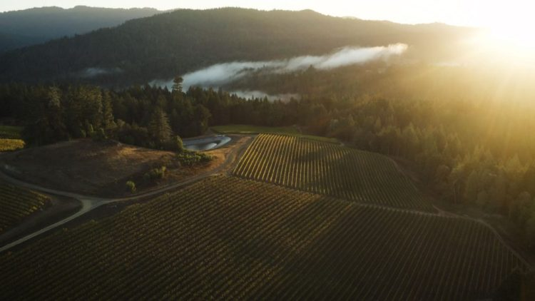 A Voice From the Fog: Current Releases From Peay Vineyards