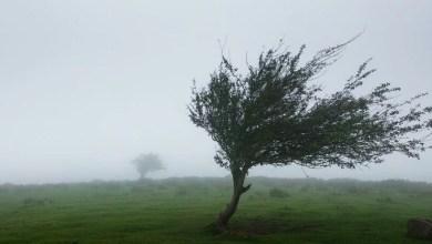 Photo of باد څه شی دی؟