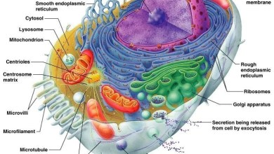 Photo of د حجرې جوړښت (Cell Structure)