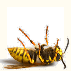 fav2 - Wasp Destroyer can kill wasps in your area