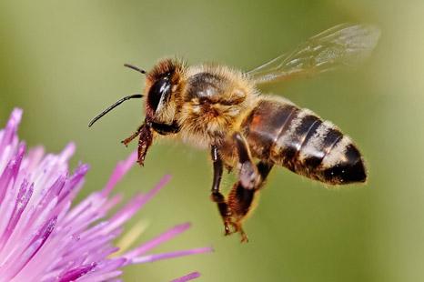 bee03 - Wasps