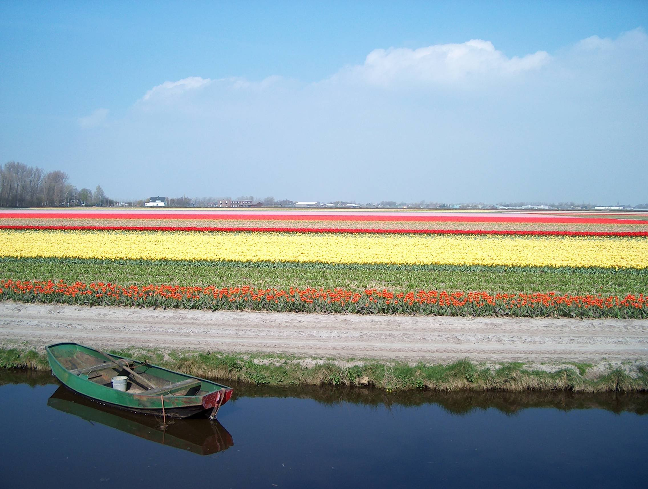 Bulb fields behind the Keukenhof