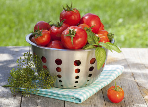 Natural Centerpieces: Fresh ripe tomatoes in colander