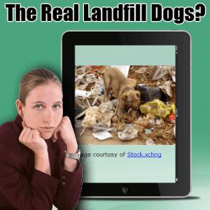 landfill dogs
