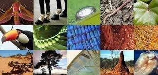 Biomimicry Strategy