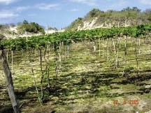 Soil Fertility Improvement, Enhancer