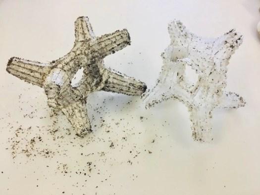 Mycelium information