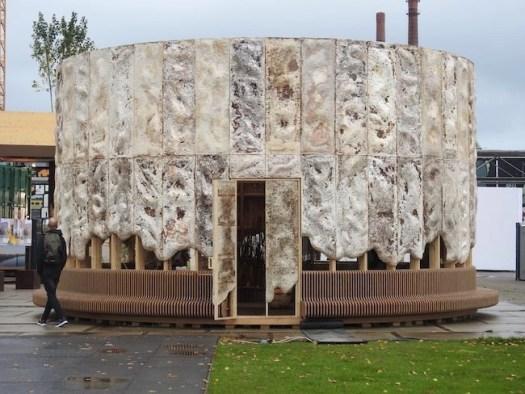 Mycelium construction project