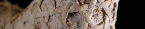 Mycelium in Construction?…some tangible progress