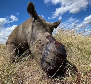 Rhino Bio-Diversity
