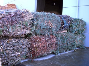 Large rectangular bales of urban woody biomass awaiting recycling truck. Photo: Forest Concepts