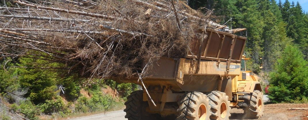 Waste to Wisdom project shows biomass energy potential