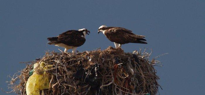Plastic Nest