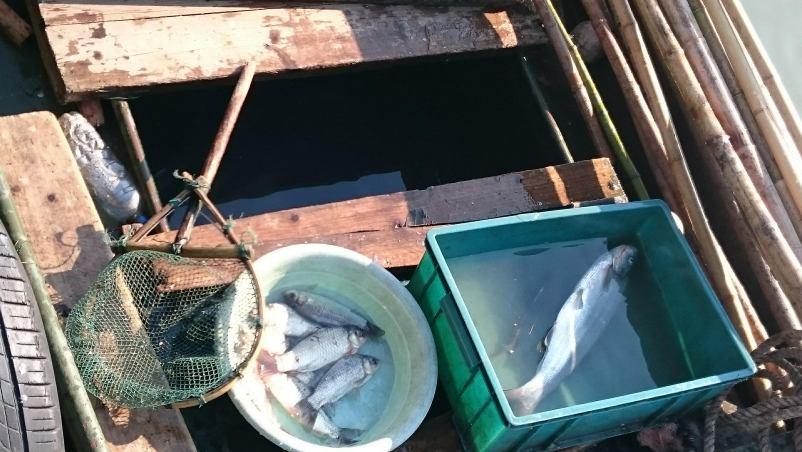 太湖で漁をする人も